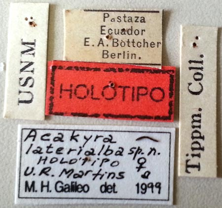 Acakyra-laterialba-Labels.jpg