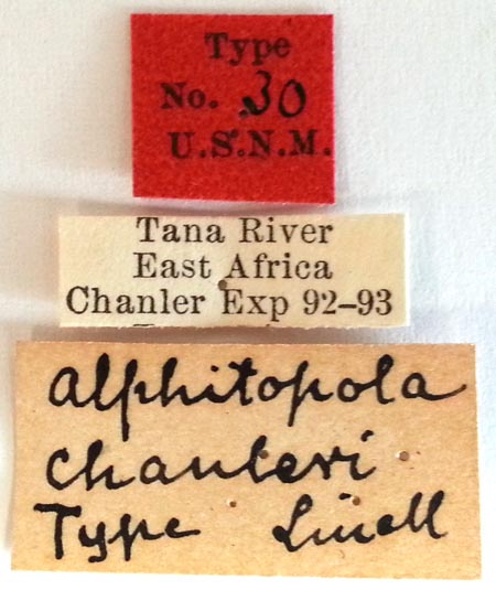 Alphitopola-chanleri-type-USNM-labels.jpg