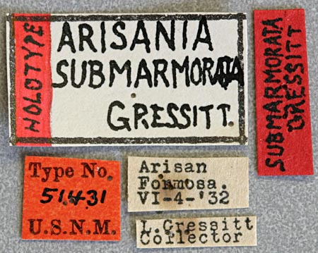 Arisania-submarmor-L.jpg
