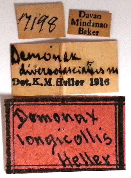 Demonax-longicollis-type-USNM-labels.jpg