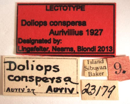 Doliops_conspersaLectoLabel.jpg