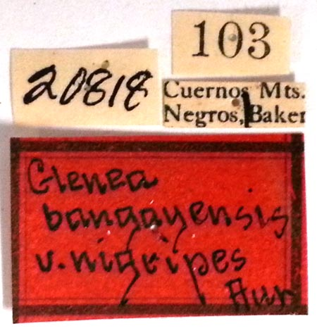 Glenea-bang-nigripes-type-USNM-labels.jpg